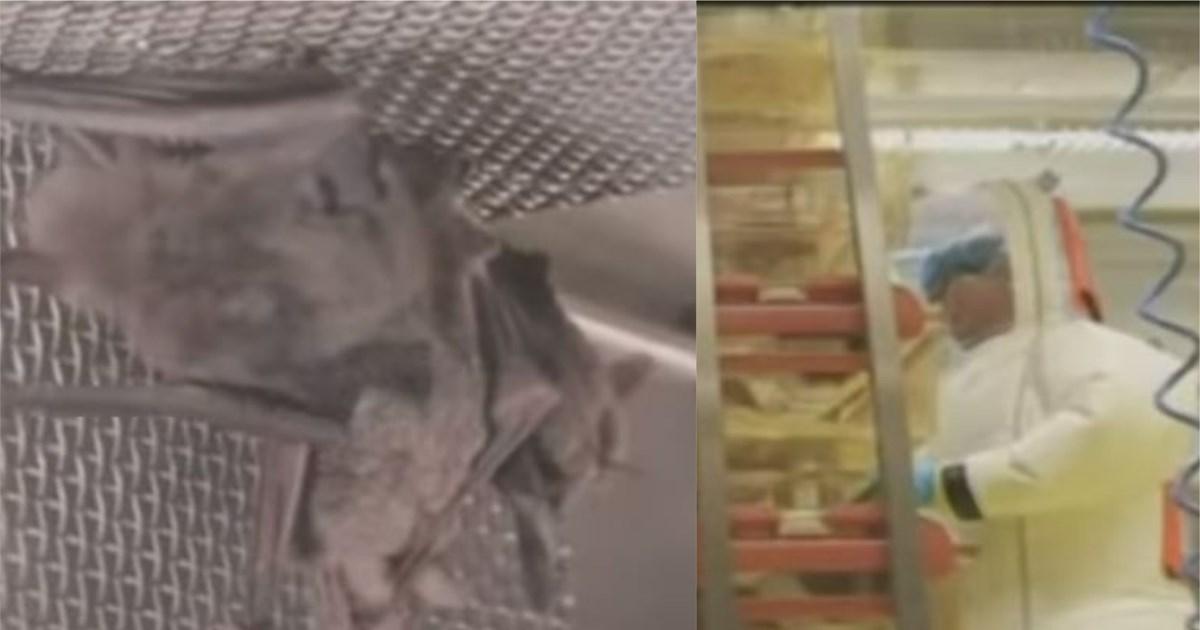 Κορονοϊός – Αποκάλυψη Sky News: Σάλος για βίντεο με νυχτερίδες σε κλουβιά…